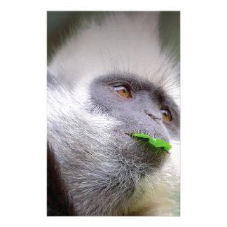 Papelaria Macaco africano