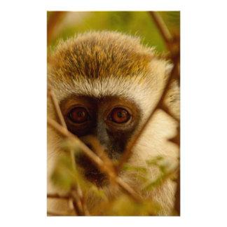 Papelaria Macaco insolente