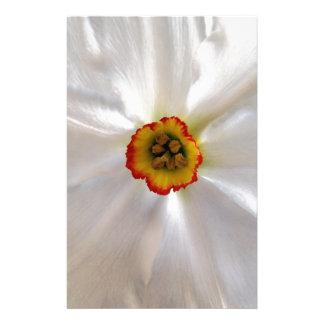 Papelaria narciso do branco da pérola