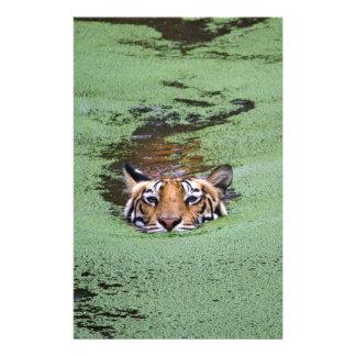 Papelaria Natação do tigre de Bengal