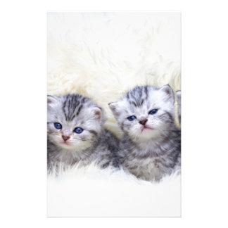 Papelaria Ninho com os quatro gatos de gato malhado novos em