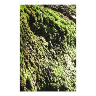 Papelaria O musgo verde no detalhe da natureza de musgo