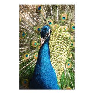 Papelaria O pavão bonito