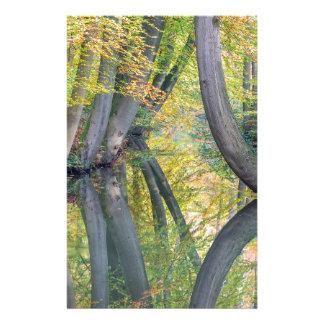 Papelaria Os troncos de árvore da queda com reflexão na