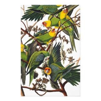 Papelaria Papagaio de Carolina - John James Audubon