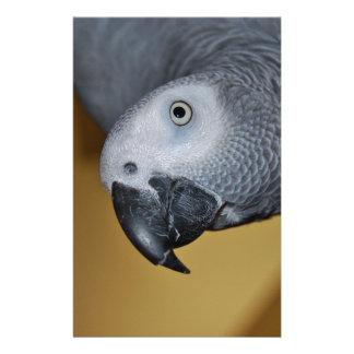 Papelaria Papagaio do cinza africano de Congo olá!