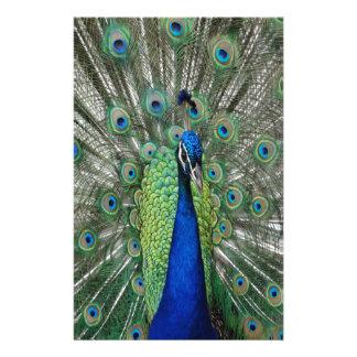 Papelaria Paraíso do Peafowl