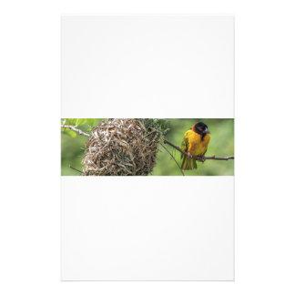 Papelaria Pássaro africano e seu ninho da grama