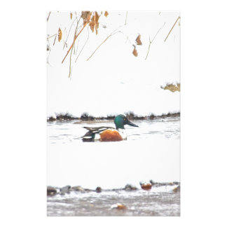 Papelaria Pato do inverno