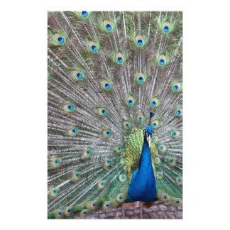 Papelaria Pavão colorido