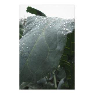 Papelaria Pingos de chuva nas folhas da couve-flor