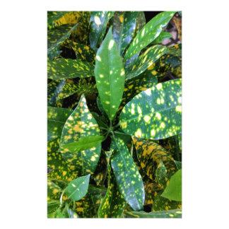 Papelaria Planta do Croton