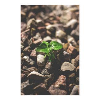 Papelaria Planta frondosa verde que começa crescer em