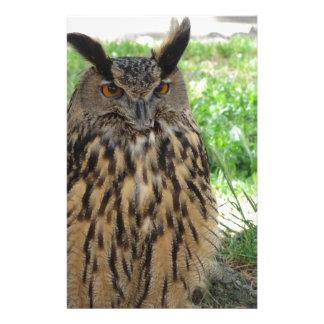 Papelaria Retrato de coruja longo-orelhuda. Otus do Asio,