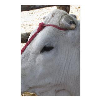 Papelaria Retrato do Chianina, raça italiana do gado