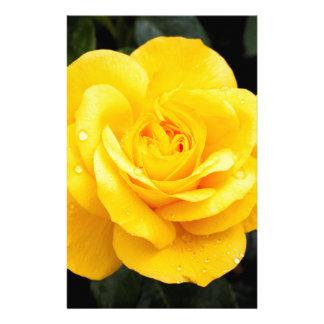 Papelaria Rosa amarelo