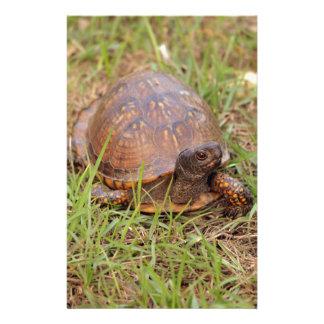 Papelaria Tartaruga de caixa oriental (North Carolina e