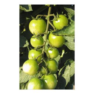 Papelaria Tomates verdes que penduram na planta no jardim