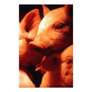 Papelaria Três porcos pequenos