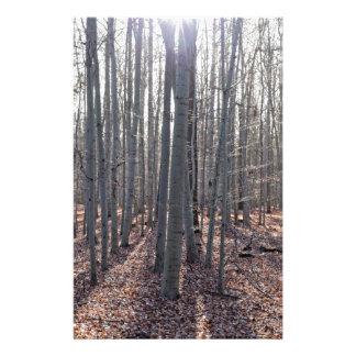 Papelaria Uma floresta da faia na queda