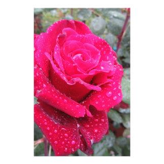 Papelaria Única flor da rosa vermelha com gotas de água