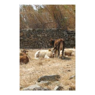 Papelaria Vacas