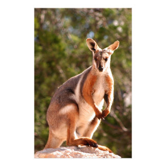 Papelaria Wallaby de rocha amarelo-footed australiano
