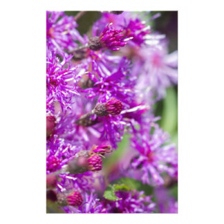 Papelaria Wildflowers altos do Ironweed