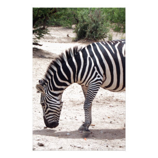 Papelaria Zebra africana no jardim zoológico
