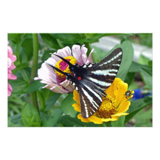 Papelaria Zebra Swallowtail+Besouro japonês
