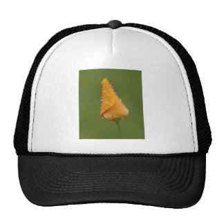 Papoila californiana boné