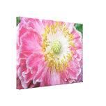 Papoila cor-de-rosa Frilly Impressão De Canvas Envolvida