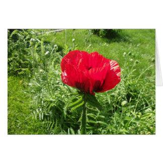 Papoila vermelha bonita cartão comemorativo
