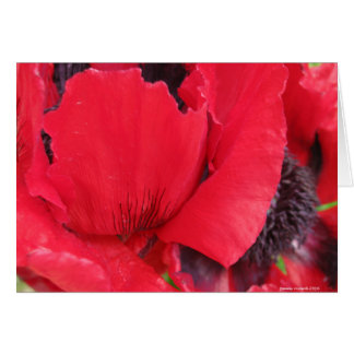 Papoila vermelha cartão comemorativo
