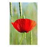 Papoila vermelha no campo de milho papel personalizados