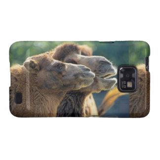 Par de camelo, retrato de cabeça, close-up, capinhas galaxy s2