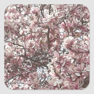 Para sempre etiquetas da magnólia do primavera