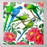 Parakeets & impressão das peônias