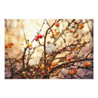 Pardal em uma árvore de Apple do caranguejo Impressão De Foto