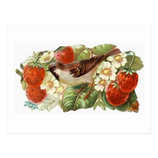 Pardal & morangos vermelhas - ilustração do cartão postal