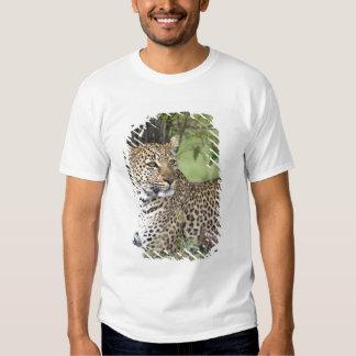 Pardus) que descansa, Masai Mara do Panthera do T-shirts