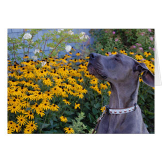 Pare e cheire o cartão das flores