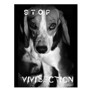 Pare o vivisection - cartão