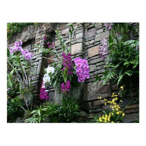 Parede das orquídeas cartoes postais