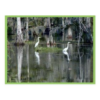 Pares bonitos de garças-reais de Louisiana na água Cartão Postal