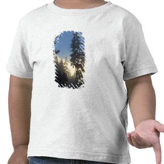 Parque de Stanley, madeiras, rolamento marinho da  Camiseta