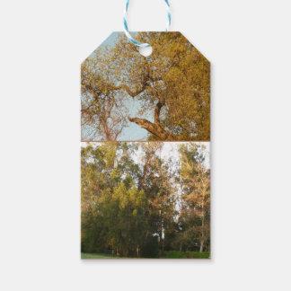 Parque dourado de Thousand Oaks da folha alguma Etiqueta Para Presente