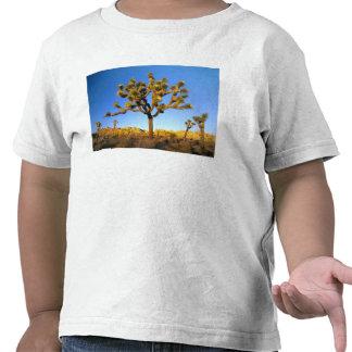 Parque nacional de árvore de Joshua, Califórnia. Camisetas