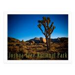 Parque nacional de árvore de Joshua Cartão Postal