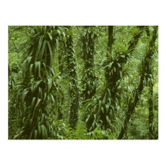 Parque nacional de Costa Rica, Arenal, floresta Cartão Postal